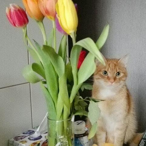 Zdjęcie numer 11 w galerii - Karmel, Daktyl, Kapitan Benny, Ptyś, Wiesław... Kochane i piękne - oto Wasze koty [GALERIA NA DZIEŃ KOTA]