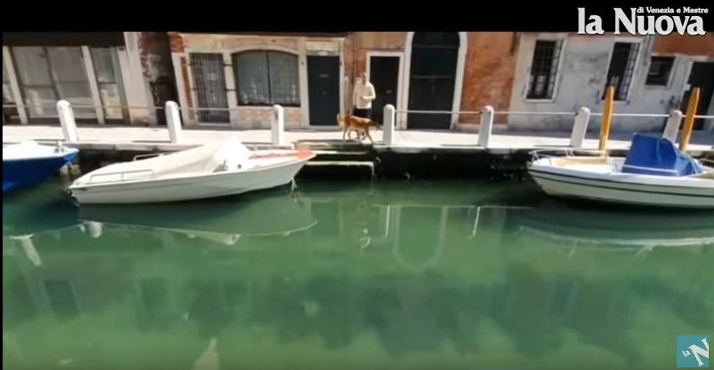 Mieszkańcy Wenecji zauważyli, że woda w kanałach jest bardziej przejrzysta