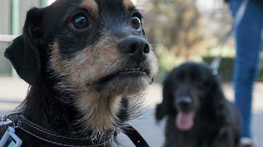 Psy szczekaniem zwróciły uwagę na problem