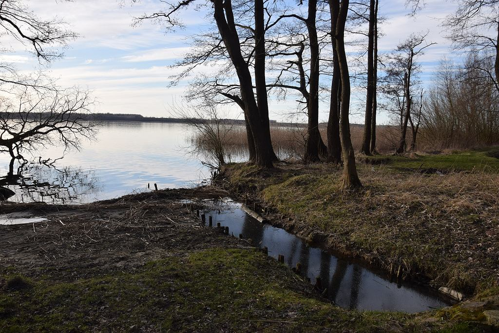 Ujście Gowienicy Miedwiańskiej do jeziora Miedwie