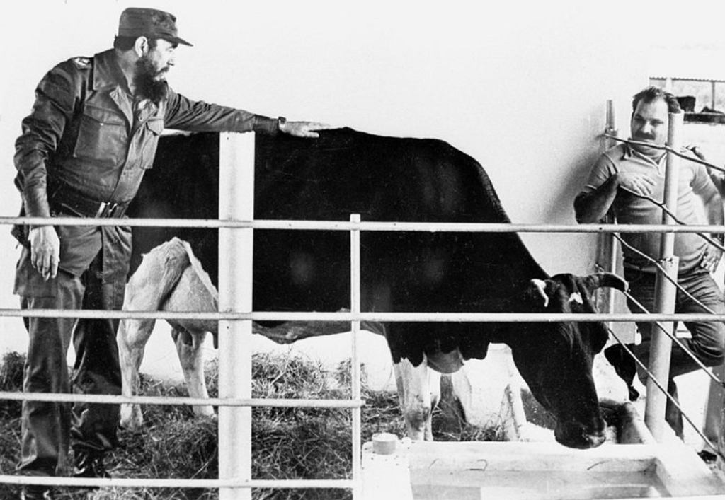 Przez 39 lat żadne zwierzę nie pobiło smutnego rekordu Ubre Blanki