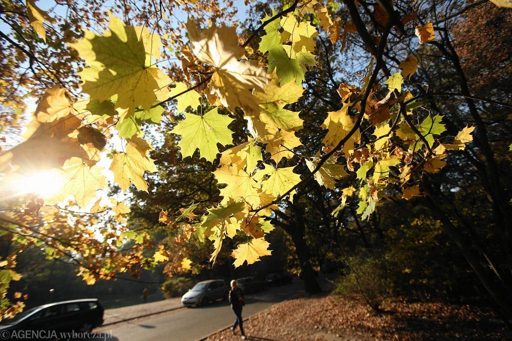 Jesień w parku Żeromskiego