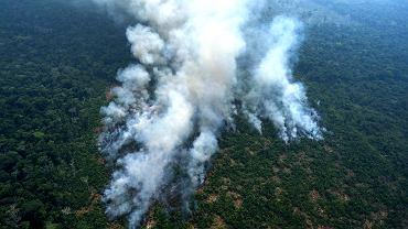 W ciągu ośmiomiesięcznych rządów prezydenta Jaira Bolsonaro liczba pożarów lasów w Brazylii wzrosła o 80 proc., a Amazonia jest wypalana pod nowe uprawy.