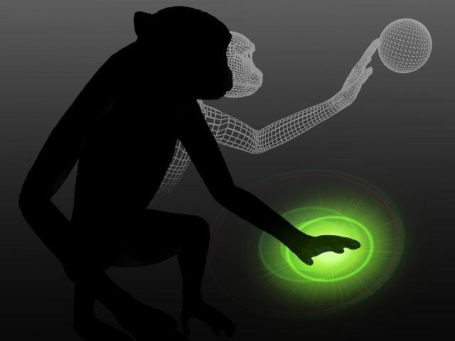 Naukowcy z Duke University dodali doznania dotykowe do interfejsu mózg-komputer testowanego na małpach. Małpy rozróżniały identyczne wizualnie przedmioty na ekranie wyłącznie po ich fakturze, odbieranej przez korę dotykową