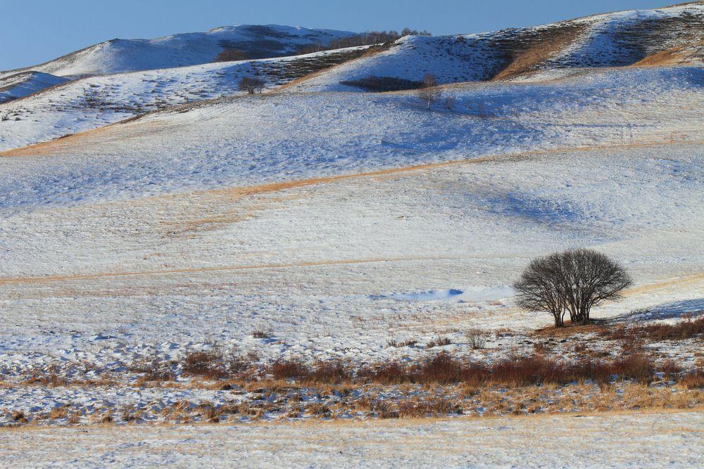 Mongolia - pustynia Gobi zimą / fot. Shutterstock