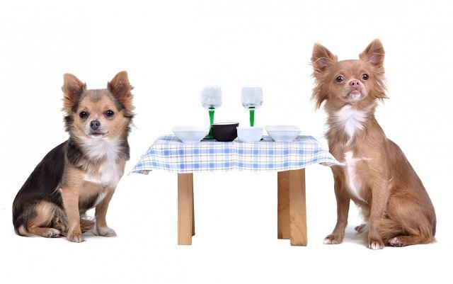 Czy Waszym zdaniem psy powinny mieć wstęp do knajp i kawiarni?