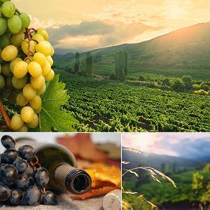 Australia - australijskie wino i jedzenie / fot. Shutterstock