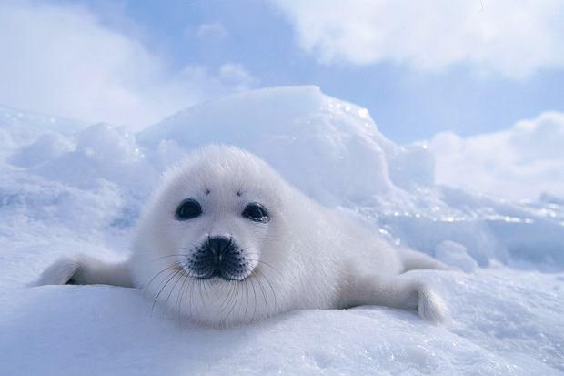 Arktyka - mieszkańcy lodowego królestwa