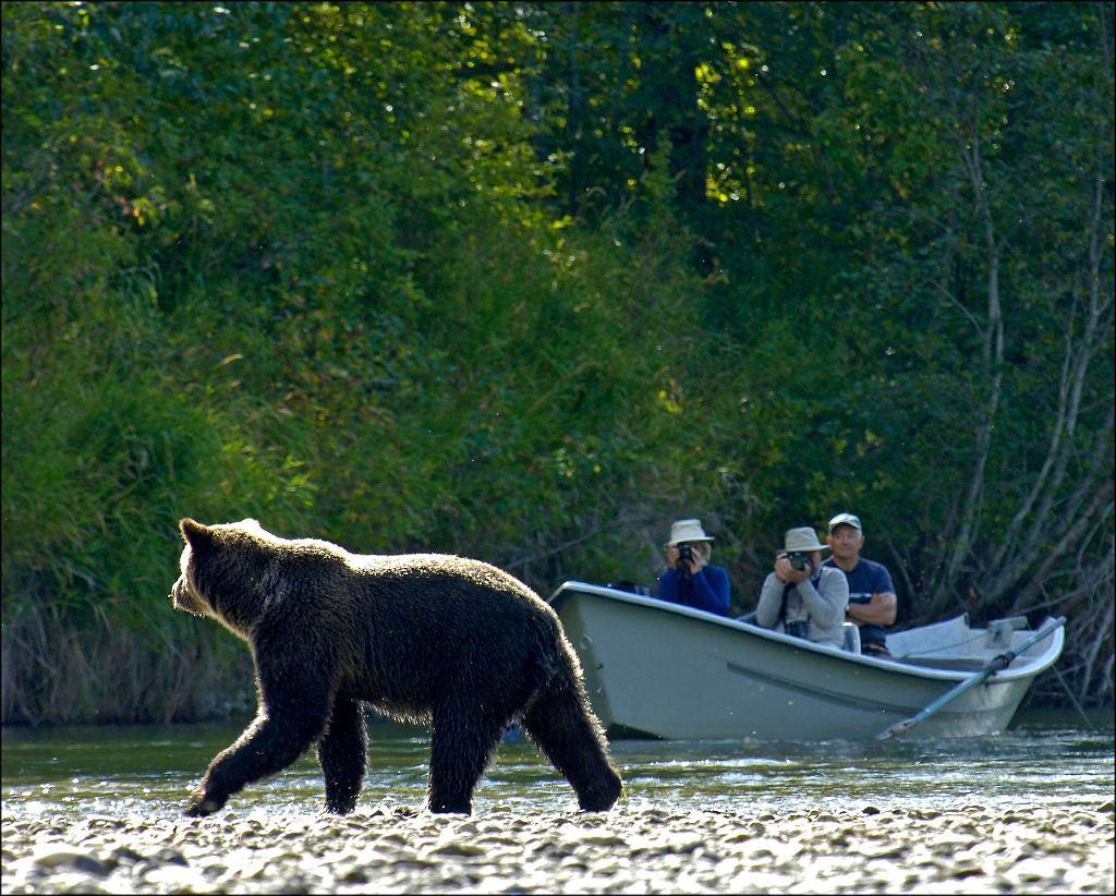 Kanada - Grizzly Safaris