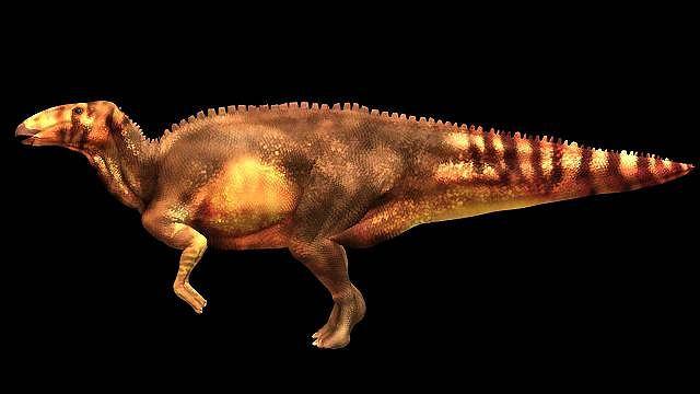 Hadrozaur nie miał pancerza. W razie spotkania z T. Reksem brał nogi za pas
