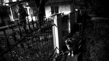 <b>Pierwsze więzienie</b> Tutaj, w garażu pod domkiem na działce w Kałuszynie, Krzysztof został przykuty łańcuchami do ściany. Porywacze więzili go tu prawie dwa lata