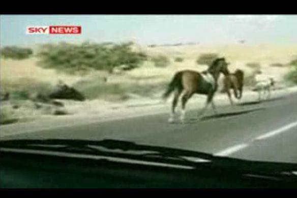 Konie na autostradzie fot. dailymotion.com