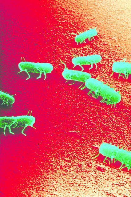 Bakterie salmonelli giną dopiero wtedy, gdy potrzymamy je w temperaturze 60 stopni przez 12 minut