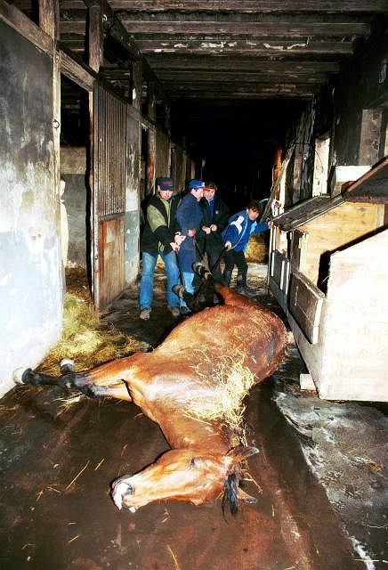 Sześć koni zaczadziało podczas pożaru w stajni Wrocławskich Torów Wyścigów Konnych na Partynicach