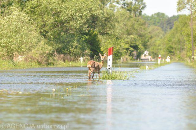 Powódź w Gryfinie