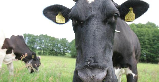 Amerykanie chcą wyprodukować mięso z powietrza. Dosłownie