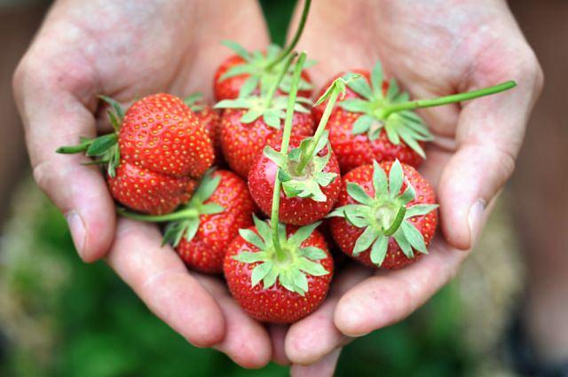 Obfitość witamin, minimum kalorii (bez bitej śmietany): truskawki to samo zdrowie.