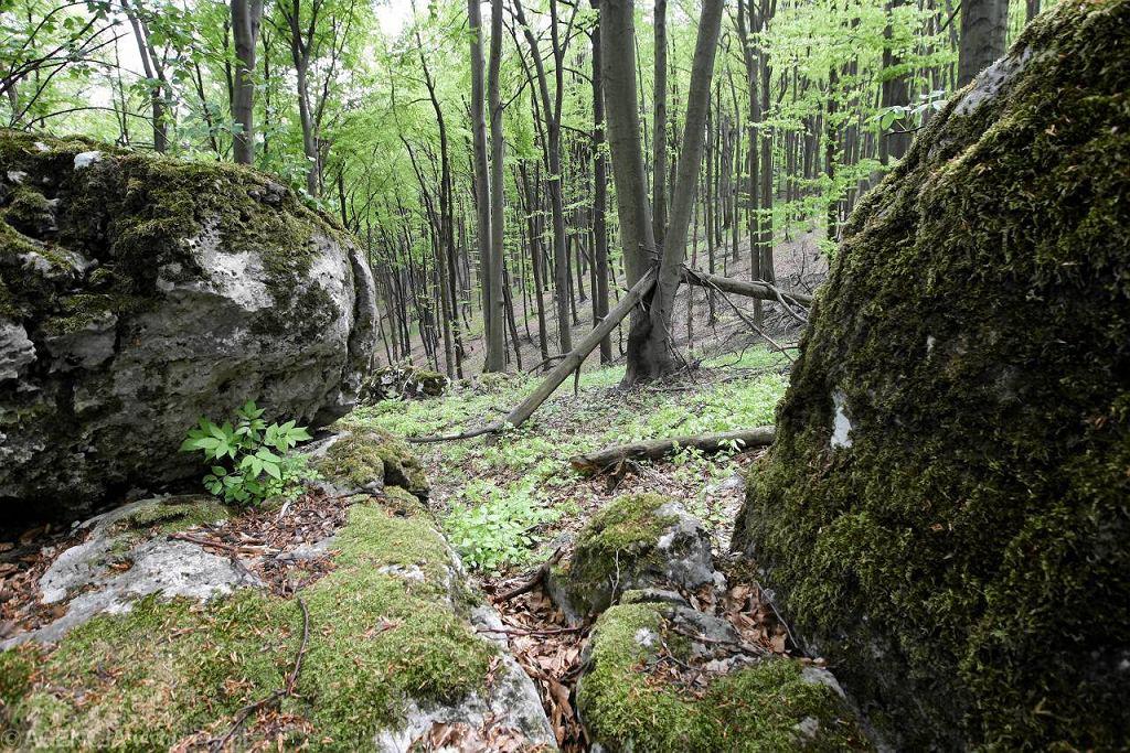 Sokole Góry koło Olsztyna pod Częstochową