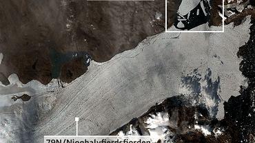 Lodowiec szelfowy 79N na Grenlandii. W białej ramce: oderwany i pokruszony fragment szeflu - lodowiec Spalte