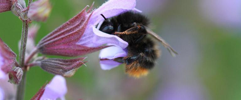 Adoptuj Pszczołę edycja ósma. Wielki finał! Dołącz i ratuj owady zapylające