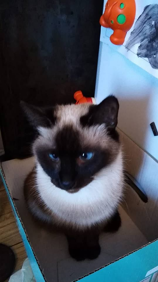 Zdjęcie numer 10 w galerii - Karmel, Daktyl, Kapitan Benny, Ptyś, Wiesław... Kochane i piękne - oto Wasze koty [GALERIA NA DZIEŃ KOTA]