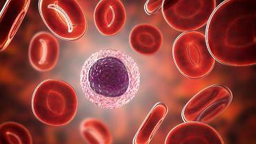 Limfocyty są głównymi komórkami układu odpornościowego