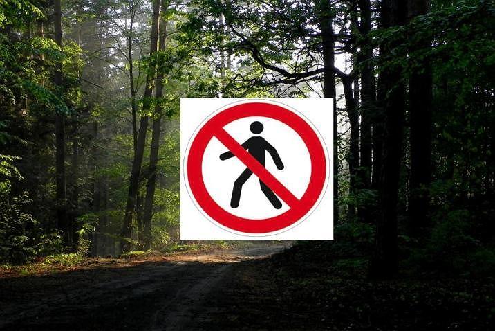 Pandemia koronawirusa. Zakaz wstępu do lasu. Gdzie na Podkarpaciu obowiązuje zakaz, a gdzie można spacerować (zdjęcie ilustracyjne)