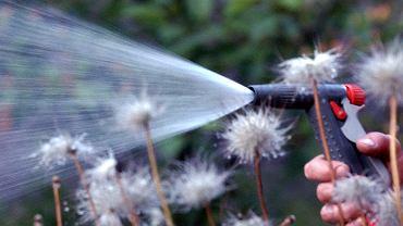 Czym jest woda szara? Jak ją wykorzystać w domu i w ogrodzie?