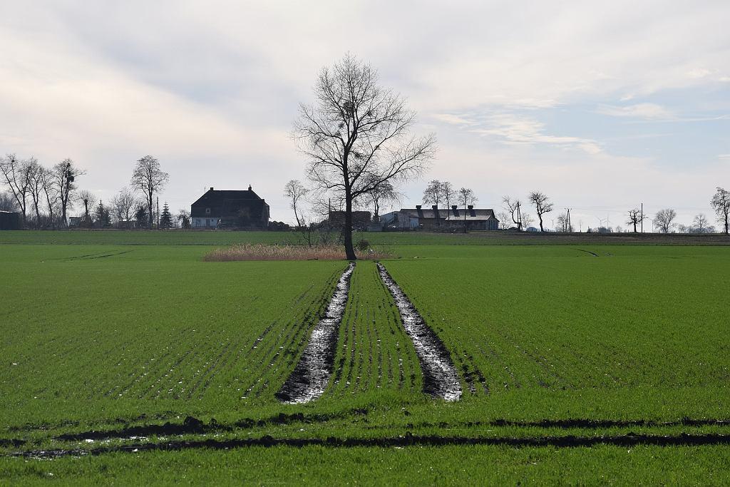 Pola uprawne w gminie Warnice