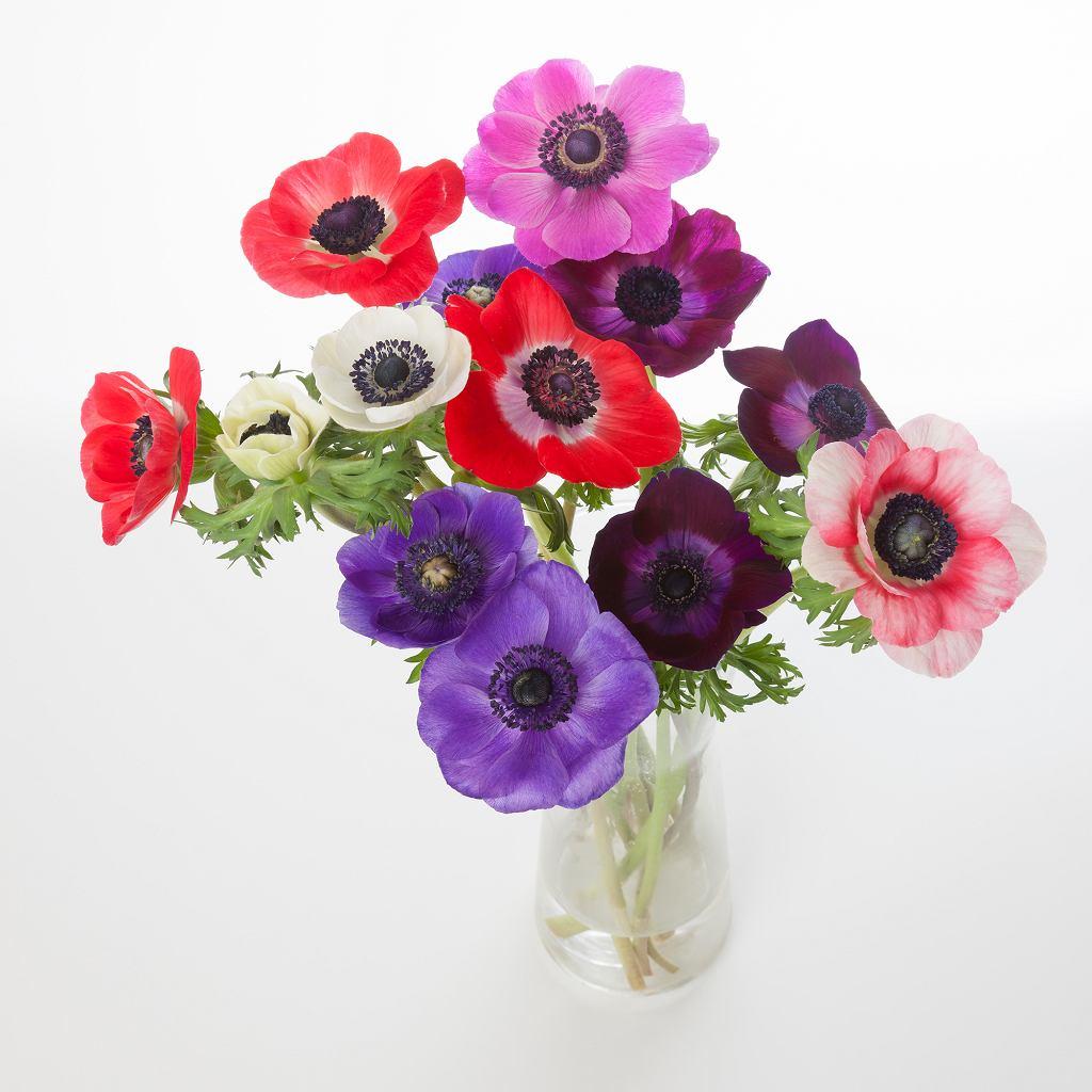 Modne kwiaty / Shutterstock