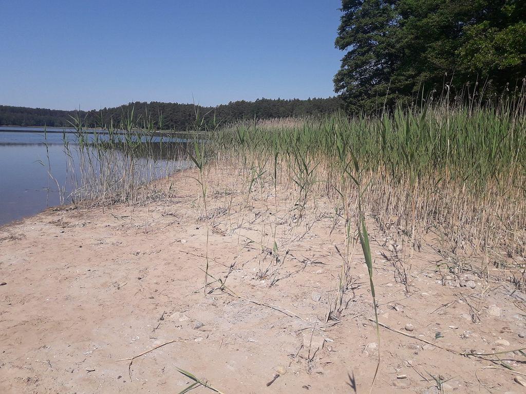 Jezioro Głębokie straciło dużą część wody