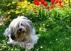 Rośliny przyjazne dla zwierząt do ogrodu. Co posadzić, czego unikać?