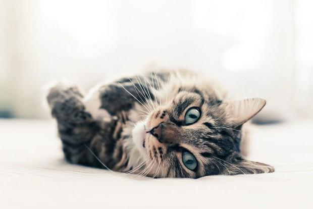 randki internetowe kocham koty hawajska scena randkowa