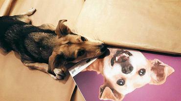 Sesja do kalendarza Fundacji Fioletowy Pies