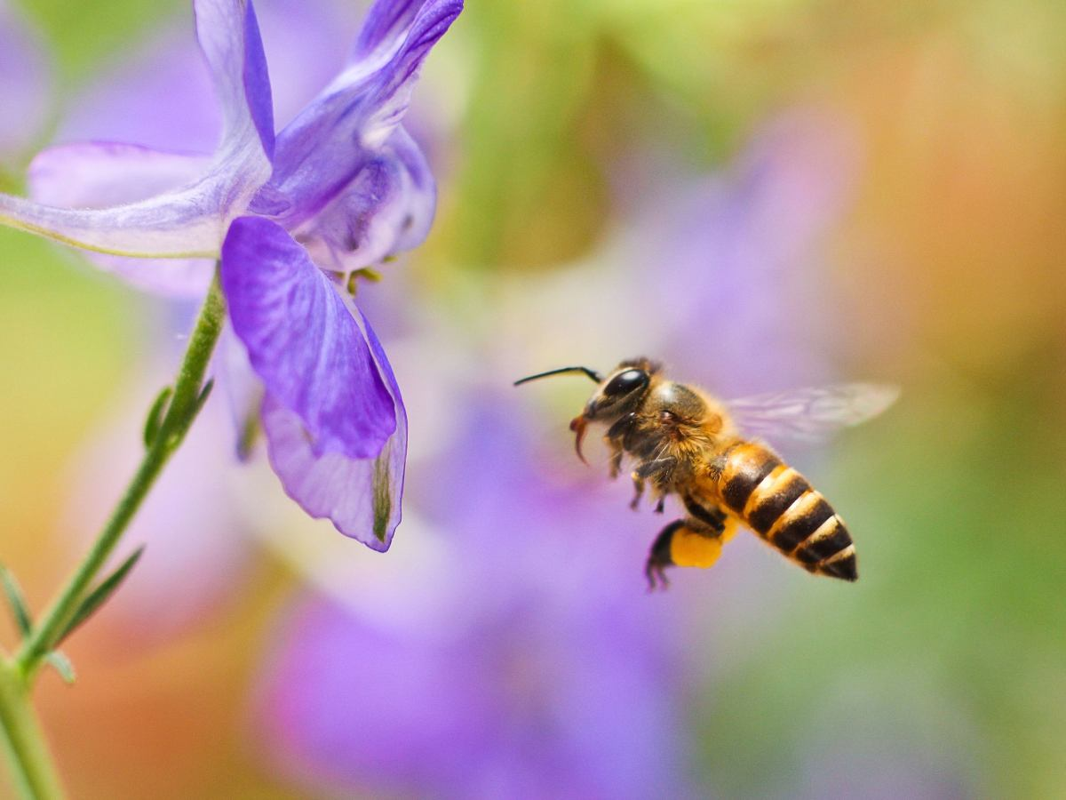 Zostaw Chwasty Na Trawniku Polub Pszczoly Osy I Szerszenie Bo Nie Przetrwamy