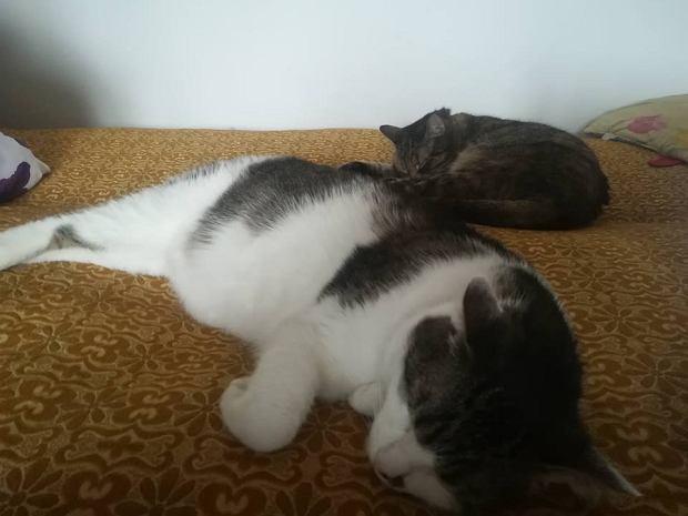 Zdjęcie numer 9 w galerii - Karmel, Daktyl, Kapitan Benny, Ptyś, Wiesław... Kochane i piękne - oto Wasze koty [GALERIA NA DZIEŃ KOTA]