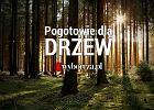 """Wspólny projekt """"Gazety Wyborczej"""" i Fundacji Dzika Polska mający na celu ograniczenie wycinki drzew"""