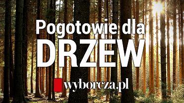 Akcja Wyborcza.pl. Cały przychód ze specjalnej prenumeraty przekazujemy na fundację Dzika Polska i jej Pogotowie dla Drzew