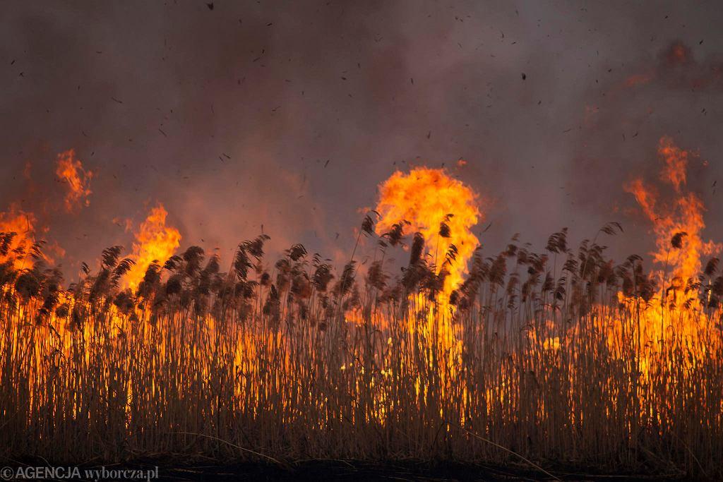 Pożar w Biebrzańskim Parku Narodowym. Środa, 22 kwietnia 2020 roku