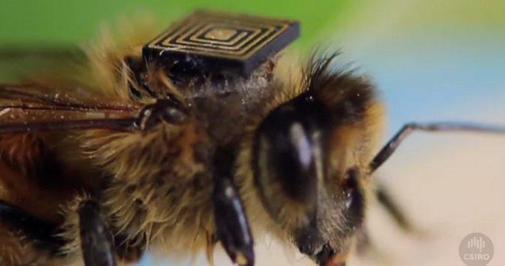 Naukowcy wykorzystują technologię Intel Edison do określenia czynników powodujących masowe wymieranie pszczół