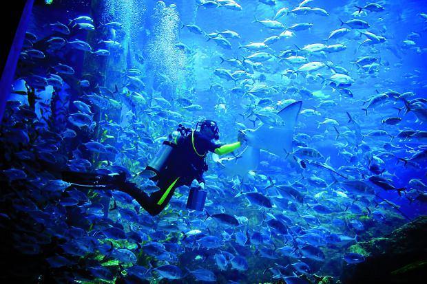 W centrach handlowych Dubaju można nawet nauczyć się nurkowania, Podróż do Dubaju: tu wszystko musi być