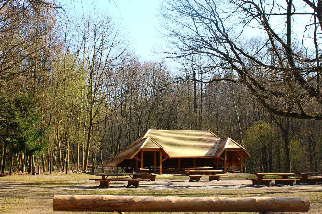 Las Łagiewnicki (fot. Blackrainbow000 / Wikimedia Commons / CC BY-SA 3.0)