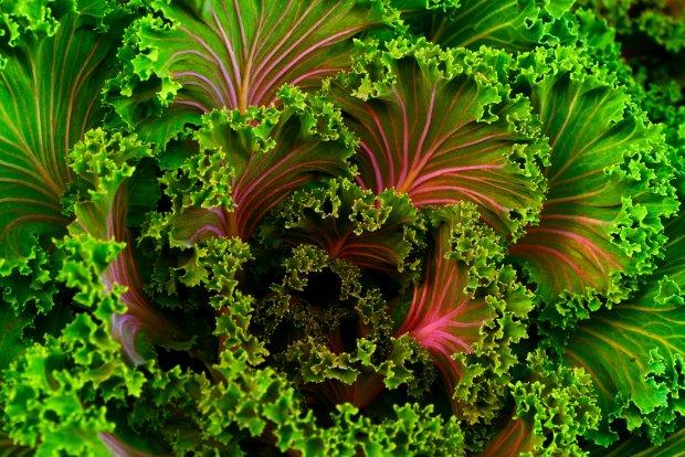 Koktajle z zielonych liści - czy to aby pyszny pomysł? (fot. Pexels)