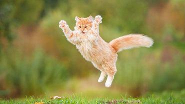 Imię dla kota powinno pasować do charakteru zwierzaka.