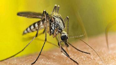Sposoby na komary - jakie wybrać rośliny i preparaty