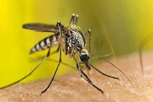 Sposoby na komary - jakie rośliny i preparaty wybrać