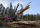 """Bitwa o szwedzkie drzewa. Fragment książki """"Leśna mafia"""""""