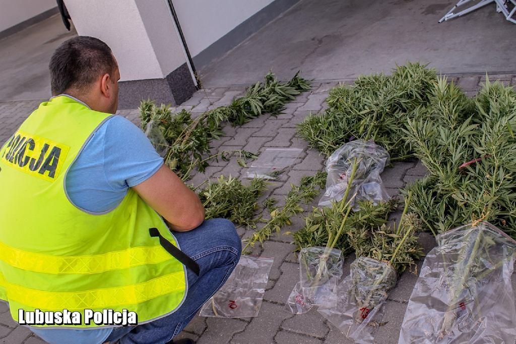 62-latka uprawiała marihuanę