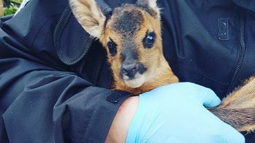 Interwencja Animal Rescue Poland.