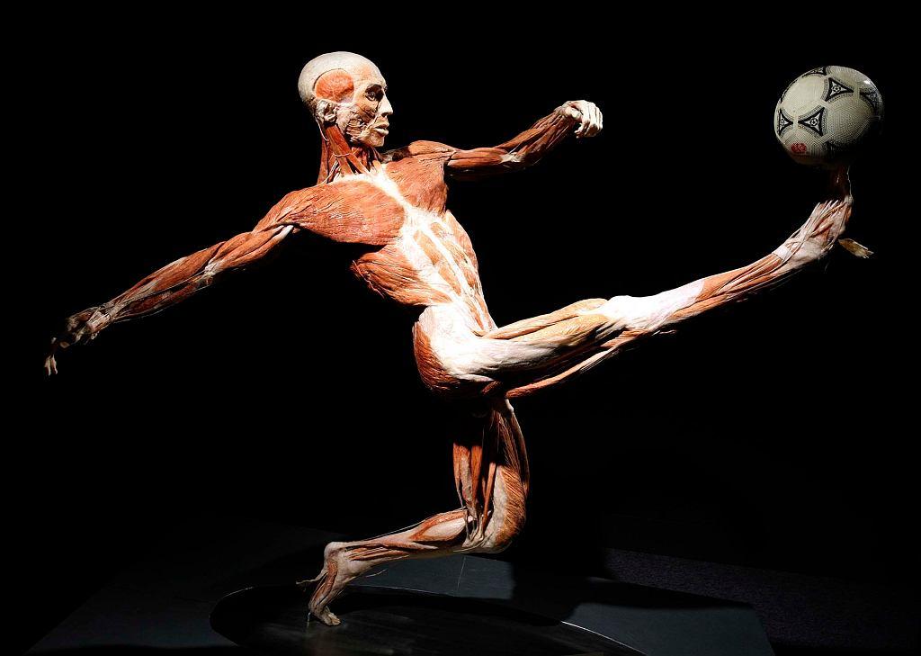 Body Worlds w Pałacu Kultury w Warszawie
